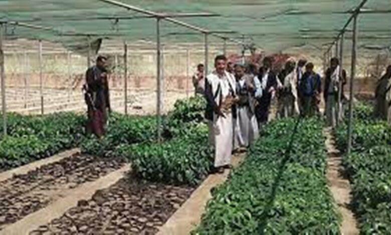 تدشين موسم زراعة البن بحقول المزارعين في مديرية جبل الشرق